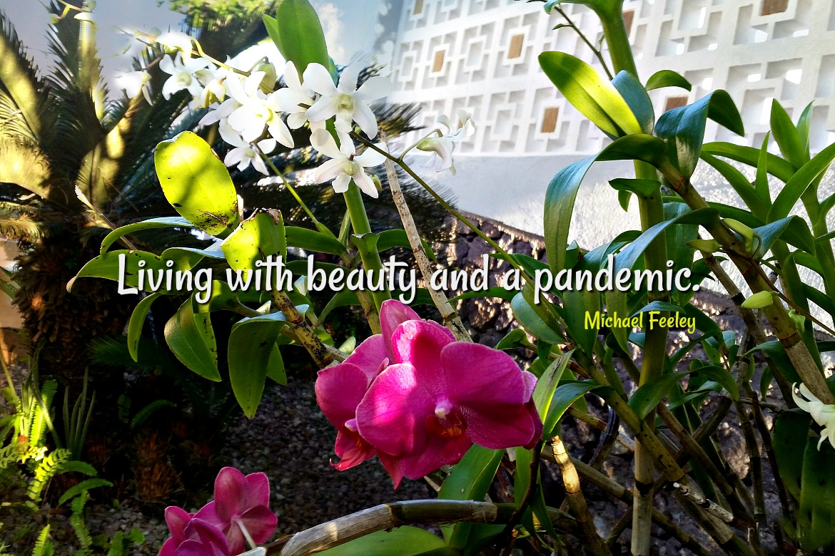 Beauty and a Pandemic