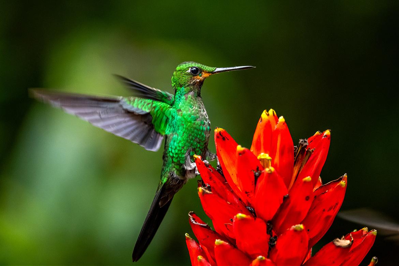 You Can Be A Hummingbird